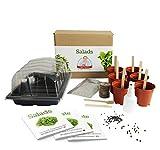 Salate - Mrs Henri's Salad Growing Kit. Züchten Sie 6 leckere Salate aus Samen. Das ideale Ge-schenk für alle Hobby-Köche. Das Premium-Kit enthält alles, was Sie für den Einstieg benötigen.