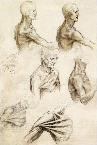 Bild Anatomie von der Schulter – Leonardo da Vinci