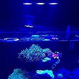 LED Aquarium Licht 30 Watt Indoor Aquarium LED-Licht Salzwasser Beleuchtung mit Touch Control für Coral Reef Aquarium (Farbe: schwarz)
