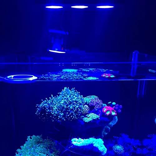 Iluminación agua salada luz LED acuario 30W interiores