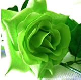 #10: Rare Exotic Rose Flower Live Plant - Lucky Green Rose ( 1 Live Plant)