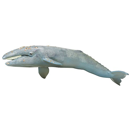 Monterey Bay Collection- Gray Whale Adult (Japan Import)