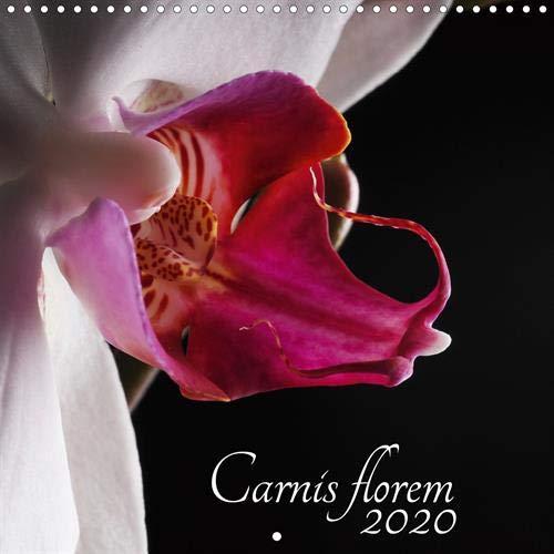 Reine Orchidee (Carnis florem 2020 (Calendrier mural 2020 300 × 300 mm Square): Sensuelle et délicate, elle est la reine des fleurs (Calendrier mensuel, 14 Pages ) (Calvendo Nature))