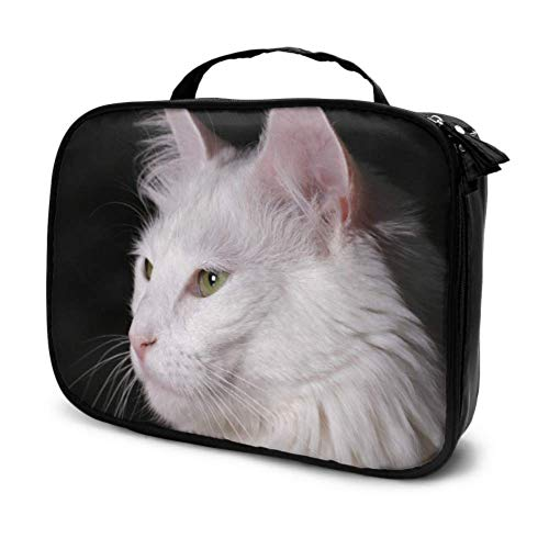 Gato Angora Gatito Blanco Pura Sangre Mascota Encantadora