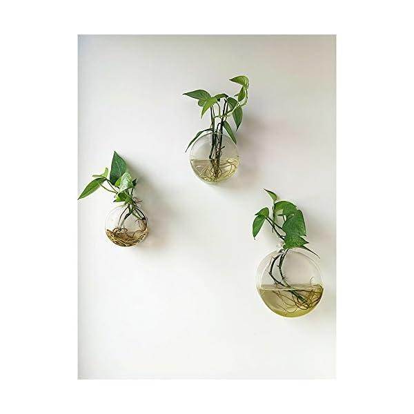 lot de 3 discoid terrarium en verre fixation murale vase plantes en int rieur pot de fleurs. Black Bedroom Furniture Sets. Home Design Ideas