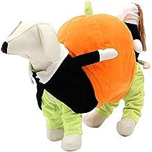 Mascota traje de perro gato llevando ropa de calabaza para la fiesta de la  foto Halloween 976e49feee1