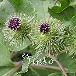 Vista 50 stücke Große Klette Achene Samen Fructus Arctii Blumensamen Chinesische Tradition Medizin Kraut Blumensamen Hausgarten-anlagen DIY