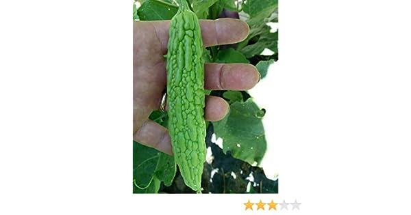 Momordica charantia KRäUTER FÜR DIABETIKER! 5+ Samen Weiße Bittermelone