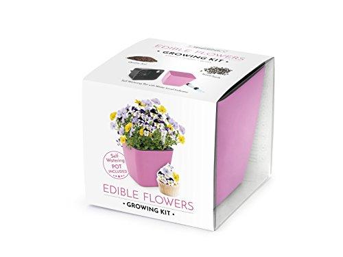 Nährstoff-kit (Domestico Essbare Blüten Anzuchtset, Edible flowers Growing Kit (Rosa), All-In-One Set - Selbstbewässerungstopf 13x13 cm, Samen, frisches Substrat mit Nährstoffen)