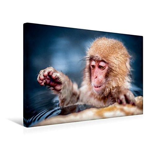 Calvendo Premium Textil-Leinwand 45 cm x 30 cm quer, AFFE beim Baden | Wandbild, Bild auf Keilrahmen, Fertigbild auf echter Leinwand, Leinwanddruck Tiere Tiere