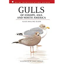 Gulls of Europe, Asia and North America (Helm Identification Guides)