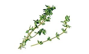 PLANTUI Capsule di Erbe aromatiche 6 Smart Garden, Thymian