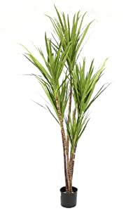 Artificial 6ft / 180cm Dracena Marginata Palm Tree Bamboo Tropical – Incredibly Realistic and High Quality – Perfect for Offices / Homes