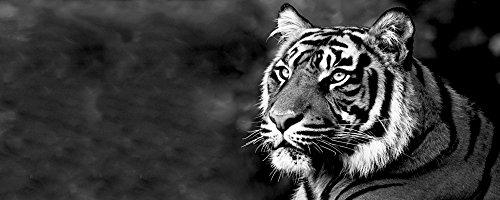 Artland Qualitätsbilder I Glasbilder Deko Glas Bilder 125 x 50 cm Tiere Wildtiere Raubkatze Foto Schwarz Weiß B6UO Tiger