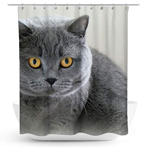 fotobar!style Duschvorhang 175 x 200 cm Britischkurzhaar-Katze.EIN Motiv aus dem Kalender GRAUE Engel (Kater Kalender)