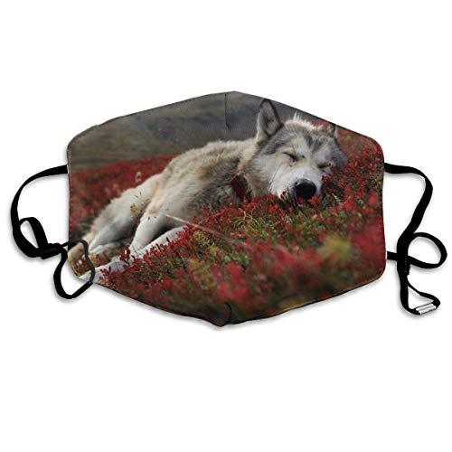 Vbnbvn Face Mouth Mask,Animals Wolf Wolves Canines Fur Sleep Allergy & Flu Mask - Comfortable, Washable Protection from Dust, Pollen, Allergens, with Antimicrobial; Asthma Mask (Mensch Wolf Kostüm)
