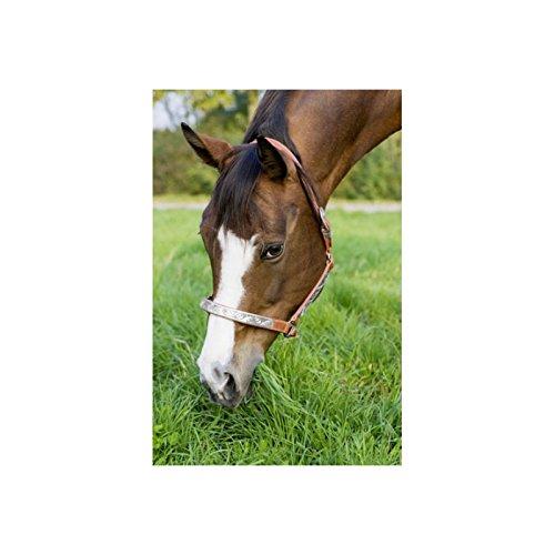 Lederhalfter Show hellbraun Pferd