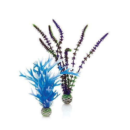 OASE biOrb Pflanzen Set mittel, blau und lila