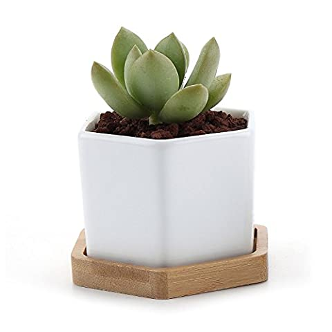 T4U 7CM Ceramic Six Sizes Sucuulent Plant Pot/Cactus Plant Pot With Bamboo Tray White