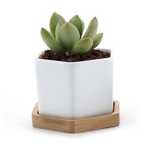 t4u-seis-tamanos-ceramicos-planta-maceta-suculento-cactus-planta-maceta-planta-contenedor-vivero-mac