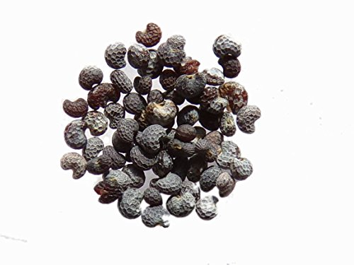 Pavot Des Jardins Blanc - 0,10 grammes - Papaver Somniferum Var. Nigrum - White Poppy - SEM03