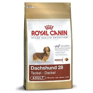 Royal Canin Teckel Adulte 500 GR Royal Canin Teckel Adulte 500 GR 410wzgXCJEL