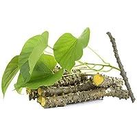 Evergreen Season Giloy Seed Sticks Guruch Fresh Herbal Kadha Stems (6-Inch) -Set of 12 (Govt. Regd. Trademark No.3337155
