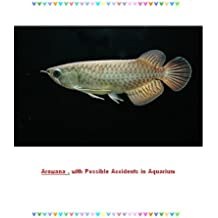 Arowana , with Possible Accidents in Aquarium (English Edition)