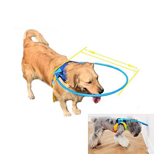 30 Lb-wand (AMhuui Schutzwestenring, Halo-Auffanggurt für Blinde Hunde mit kranken Augen Verhindern Sie Kollisionsunfälle und Bauen Sie Vertrauen auf Hunde stoßen gegen die Wand,XXS)