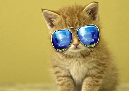 Katze #14 Lustiges buntes Poster süßes Tierbild Schöne Haustiere Sonnenbrille Foto Kinderzimmer Kunst Niedliche Katze Wanddekoration Nachdruck Grafik - A4 Laminated 21 x 30cm - 8.3 x 11.7 inches