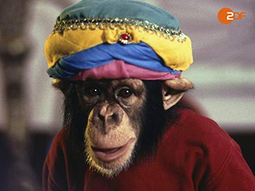 Charly und der Affengott