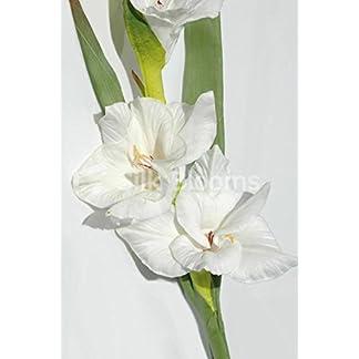 Gladiolos color marfil, artificiales