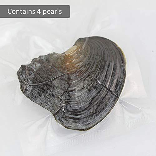 Panamami Frauen-Schmuck-runde Perlen-Dekoration-Vakuumverpackung einzeln eingewickelte Muschel eine Auster mit lebenden Perlen-gutem Geschenk - gelegentliches