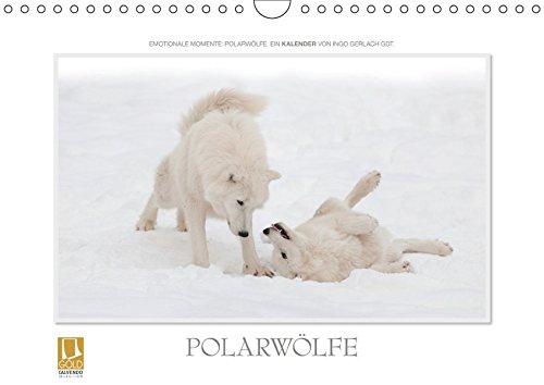 Emotionale Momente: Polarwölfe. (Wandkalender 2019 DIN A4 quer): Ingo Gerlach GDT, der renommierte Naturfotograf hat wunderschöne Bilder des ... (Monatskalender, 14 Seiten ) (CALVENDO Tiere)