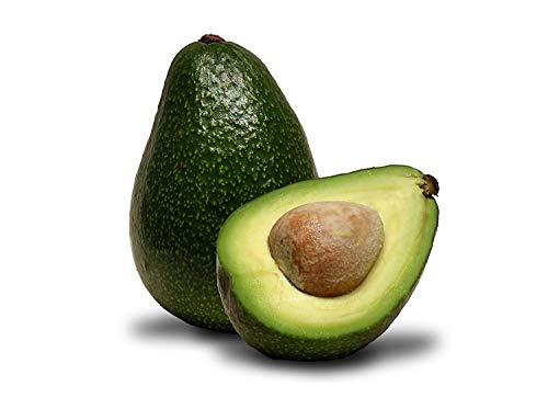 10 pezzi di avocado semi verdi frutto molto delicious persea americana mill pera seed facile da coltivare, semi della frutta per il giardino domestico delle piante