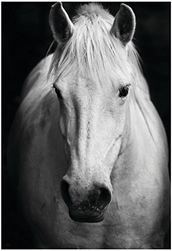 Art Show Poster (Weiß des Pferdes Schwarz und Weiß Art Portrait Poster 33x 48,3cm)