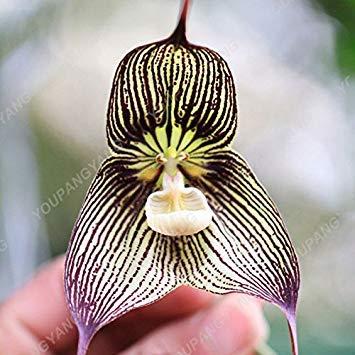 VISTARIC 13: 100 Pcs mixte vrai Cactus Seeds, Mini Cactus, Figuier, Graines Bonsai fleurs, vivaces herbes Plante en pot pour jardin 13