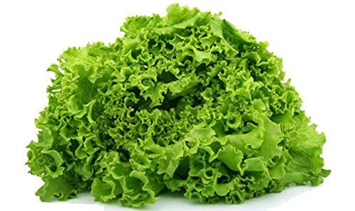 Portal Cool 60 Samen Salat Batavia Frühling Goldene Methode Bio-Samen Salat Gemüse