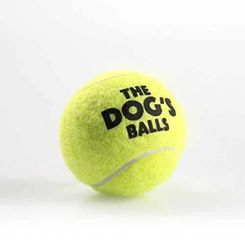hundeinfo24.de Der Hundeball Für Hunde. Der Ball Zum Spielen Und Trainieren. Diese Bälle Halten Ihren Hund Gesund – Das Beste Für Die Gesundheit Eines Hundes