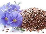 5 Liter ProFair® Leinöl, kaltgepresst, 100% aus reiner Leinsaat – VERSANDKOSTENFREI! - 2