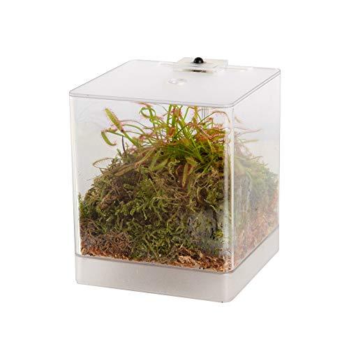 Swampworld Mini-Terrarium - Beleuchtung - Fleischfressende Pflanze - Sonnentau