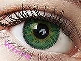 Farbige Kontaktlinsen Jahreslinsen grün Immergrün
