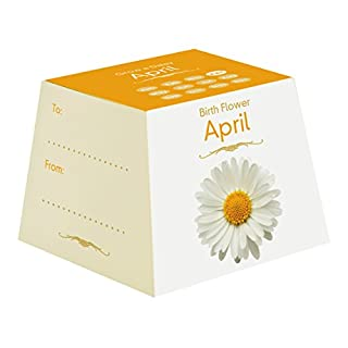 Gift Republic April Birth Flowers