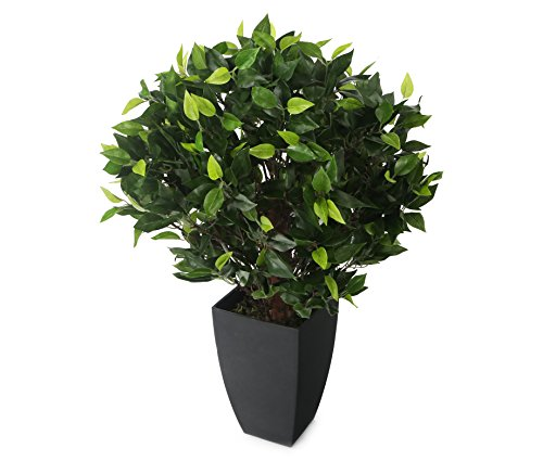 Closer2Nature Artificial 2ft Danielle Weeping Fig Tree in a Decorative Black Pot
