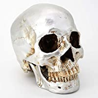 Cranstein A-525 Human Skull, 2 Pieces, Life-size (Color Sliver)