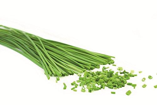 lot-de-50-graines-ciboulette-bio-aromatique-potager-vivace