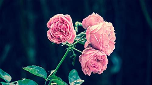 ClassicJP 1000 teilige Puzzles für Erwachsene DIY rosa Rosen, Blumen, Garten Stichsägen für Kinder & Freund