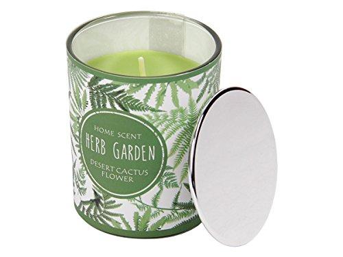 Duftkerze im Glas mit Deckel 6 x 7,5 cm Candle Raumduft Kerze Herb Garden Geschenkidee von Alsino, 144029 Desert Cactus