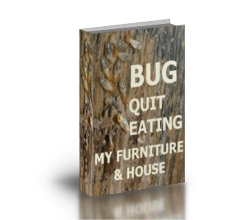 bug-quit-eating-my-furniture-house-english-edition