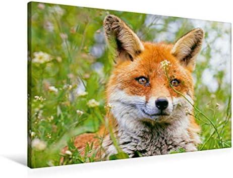 Premium Premium Premium Textile Toile 45 cm x 30 cm paysage de Portrait d'un wachsaHommes  Renard | être Dans L'utilisation  417aaf